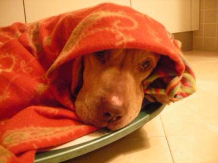 Associazione La Lupa: un aiuto da Pet's Planet per gli animali di strada