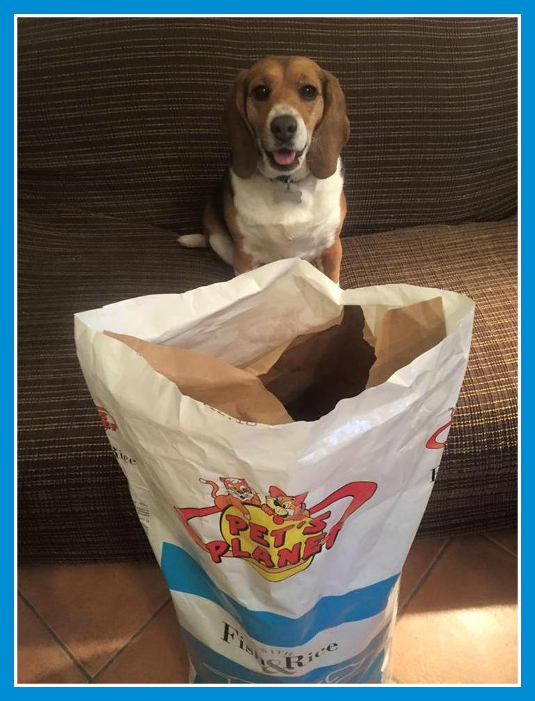 Chloe, la Beagle con una storia a lieto fine!