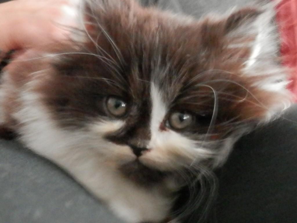 Qual è il giusto nutrimento per un gattino?