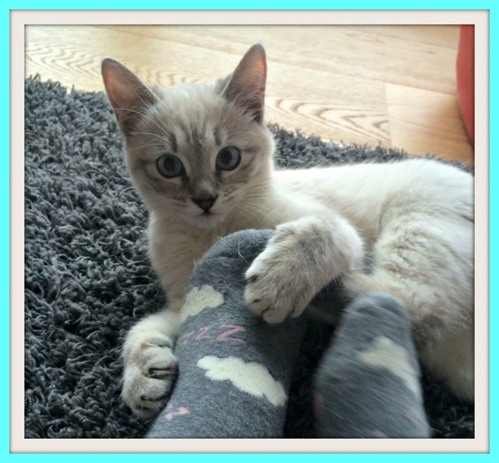 """Les chats disent aussi """"je t'aime"""": 3 secrets"""