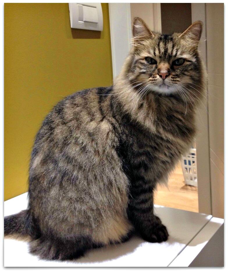 Sensinary®, i croccantini per gatti scelti da Bea, riscuotono successo tra i suoi amici felini