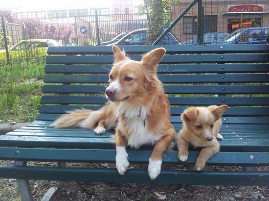 La storia di Billy e Yuki, due dolcissimi cagnolini trovatelli