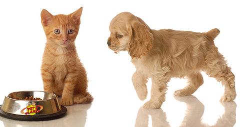 AperiDog a Torino, l'occasione giusta per conoscere i prodotti Pet's Planet dedicati ai nostri amici animali
