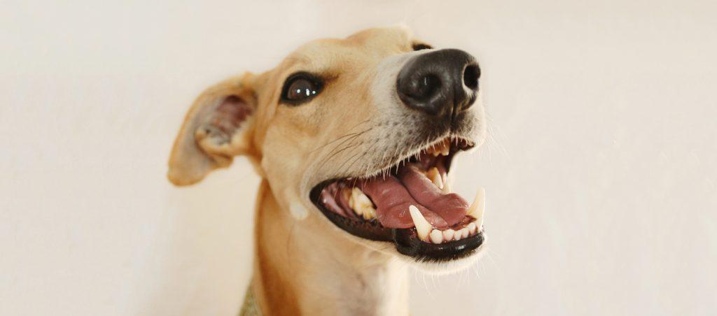Hygiene dentaire des chiens