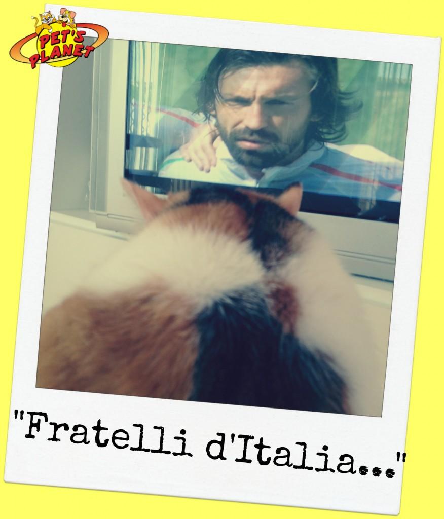 gatto_Andrea_Pirlo