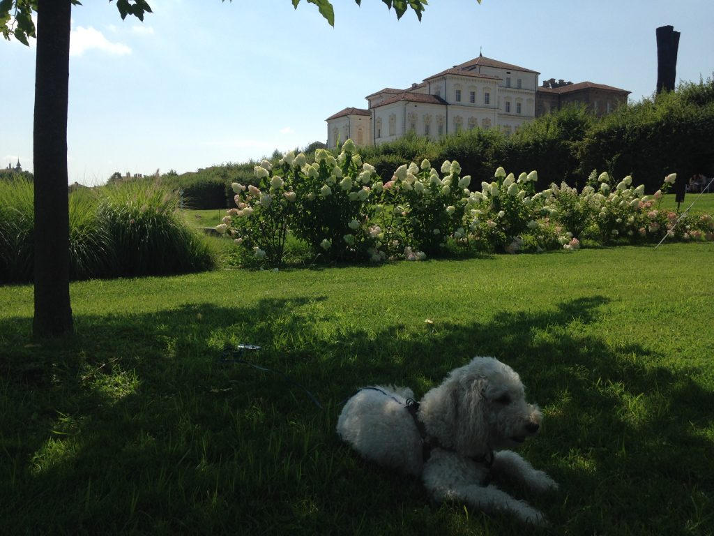 Giardini reali… dog friendly!