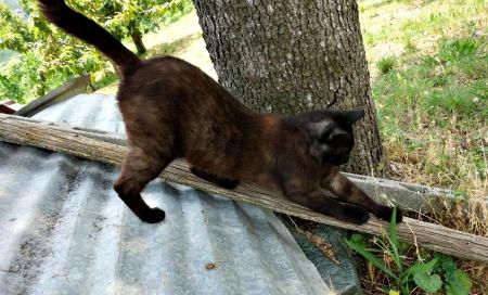 Sensinary®, l'alimento scelto da Kuroneko, il gatto lavoratore