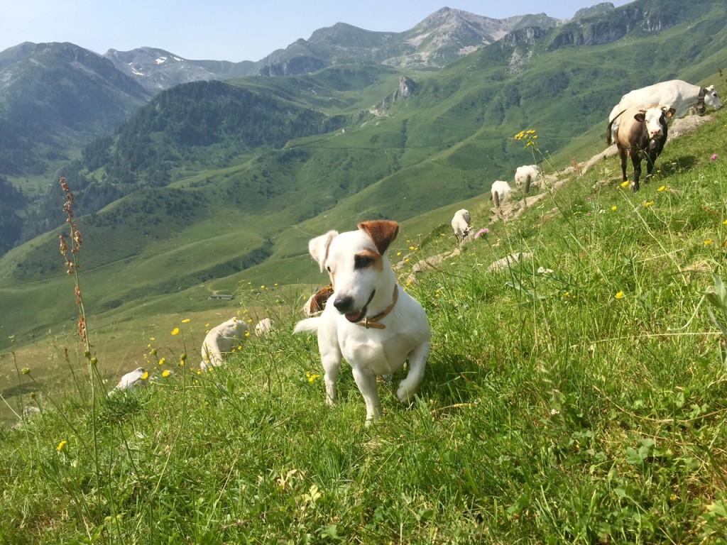 Gita in montagna per Mic: divertimento, aria buona e tante corse!