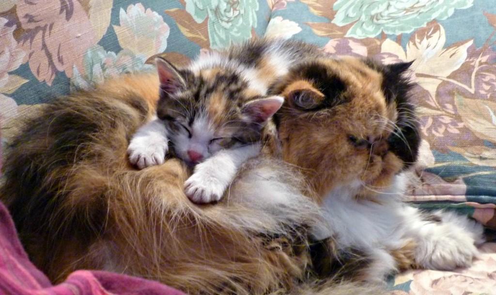 La storia di Pulce, una gattina dolcissima