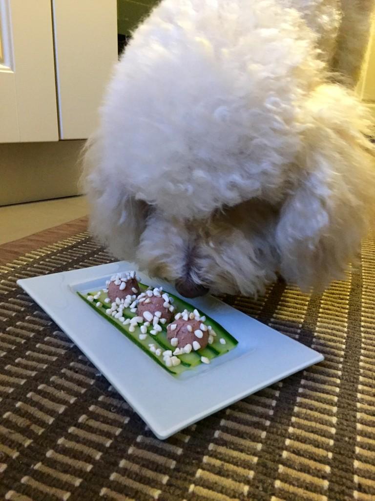 Il barboncino Pixi presenta: polpettine di paté di suino Pet's Planet con carpaccio di zucchine