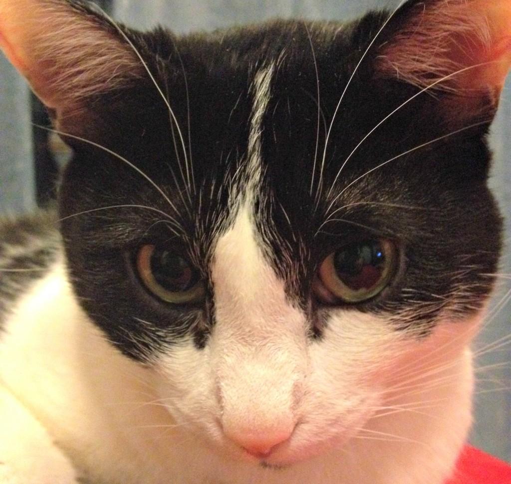 gatto-sguardo