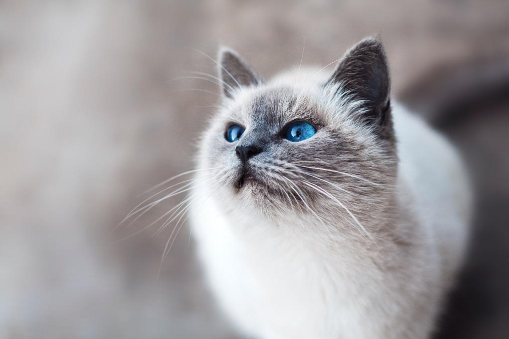 Quel régime pour les chats stérilisés?