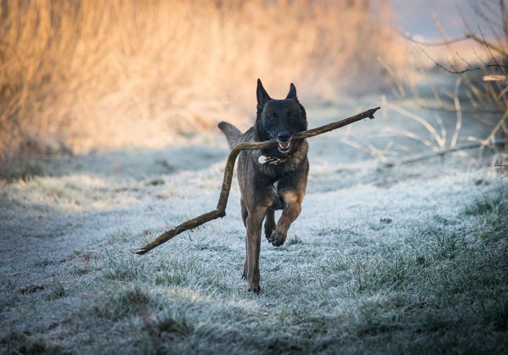 Inverno e malanni di stagione: l'alimentazione come difesa per cani e gatti