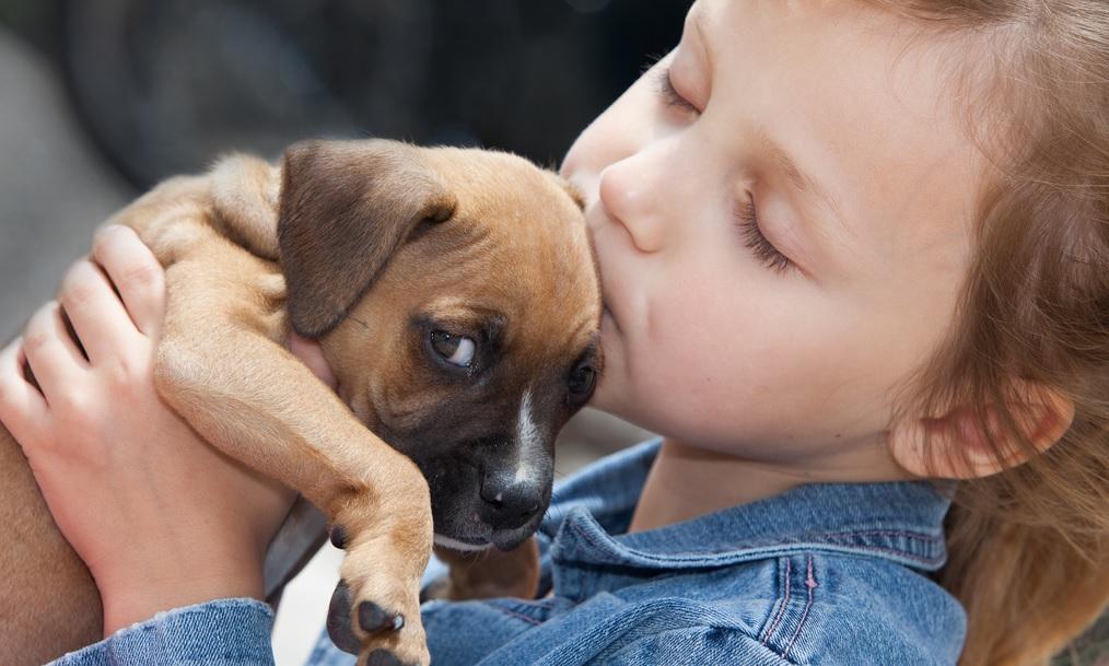 Cani, gatti e bambini: quali regole di convivenza?
