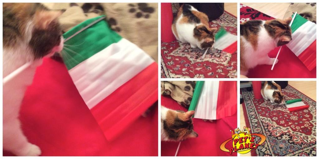 gatto_bandiera_italia