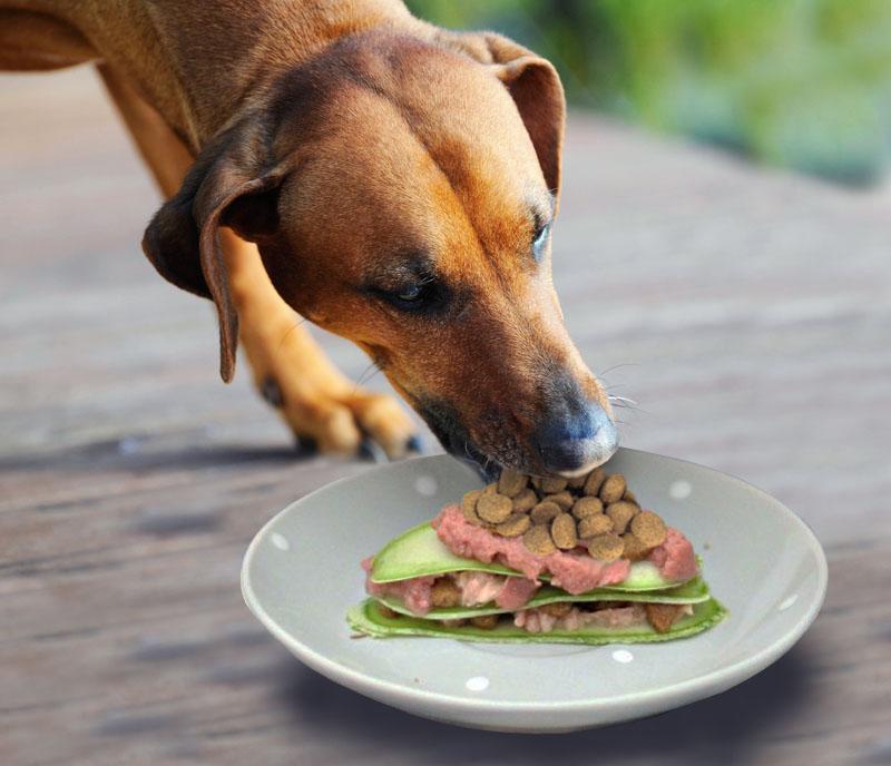 Carpaccio e filettini, due ricette Pet's Planet su misura del tuo cane e del tuo gatto