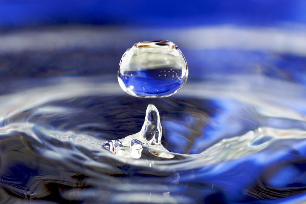 Acqua, proteine, minerali… cosa c'è negli alimenti Pet's Planet?