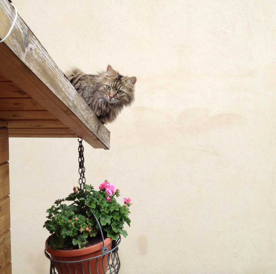 Bea: casa nuova, alimentazione nuova con Sensinary®, adatta ai più gatti sensibili