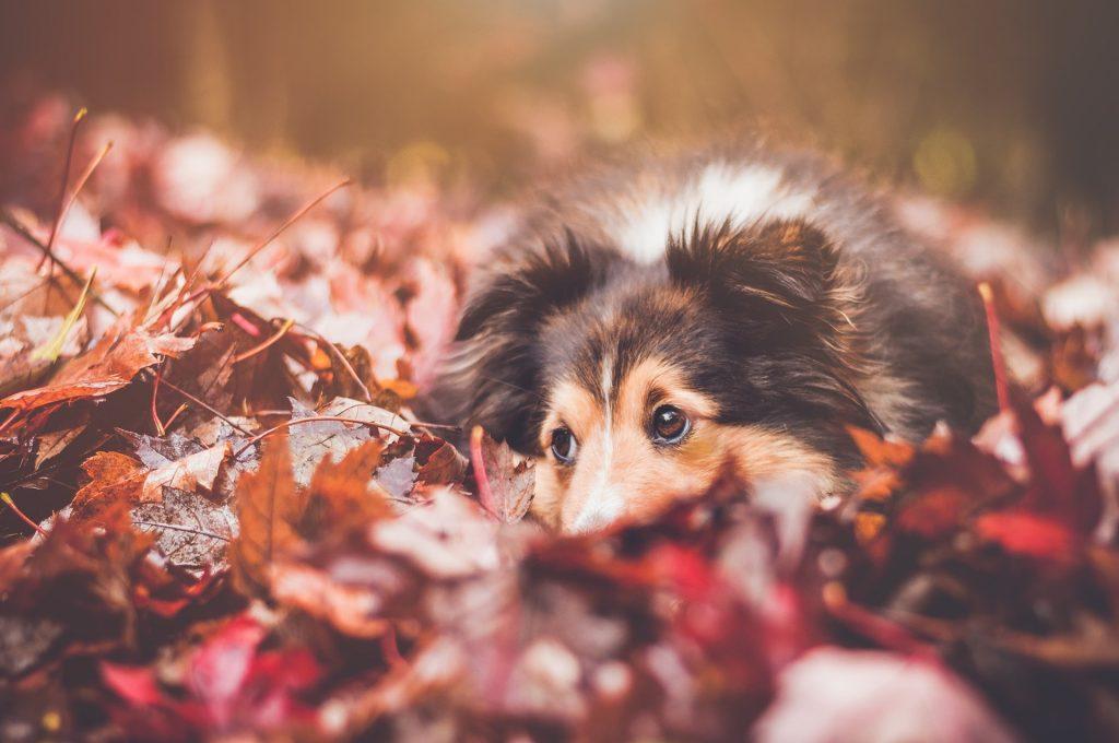 Cani, gatti e l'autunno: la stagione della muta e dell'alimentazione personalizzata