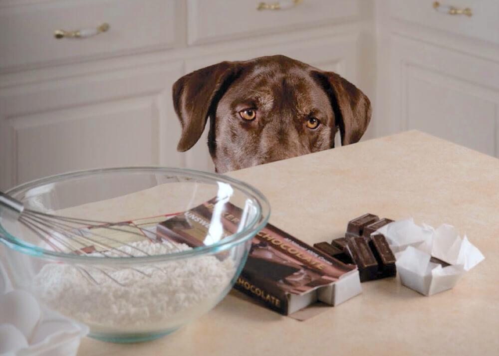 I cibi del pranzo di Natale da non dare a cani e gatti