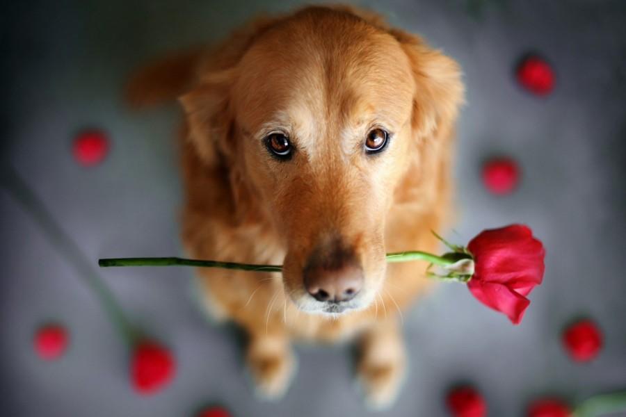 """Anche il cane dice """"Ti amo"""": 3 modi che forse non conosci"""