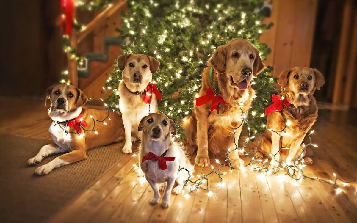 Immagini Divertenti Animali Natale.Idee Per Regali Di Natale A Cani E Gatti Pet S Planet