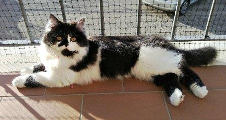 L'alimentazione di Carlitos, gattino vorace di dieci mesi