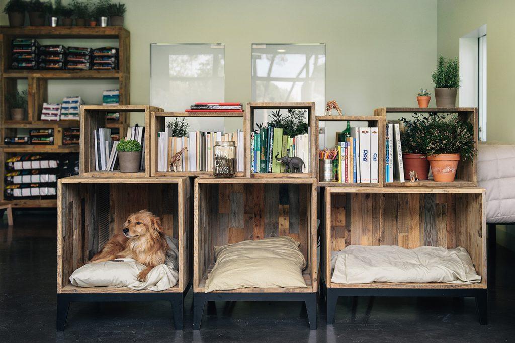 Des idées pour décorer votre maison en présence de chiens