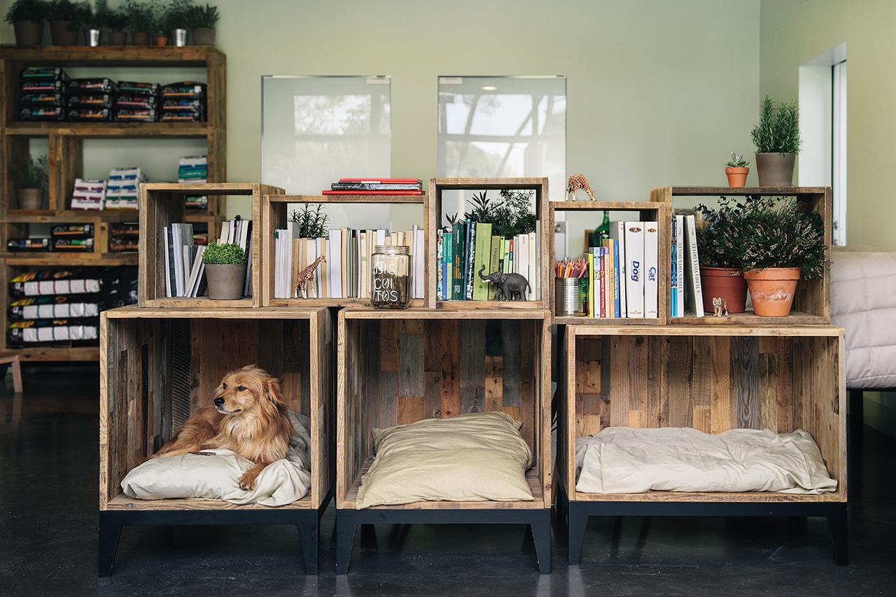 Idee Cucce Per Cani idee per decorare la tua casa in presenza di cani - pet's