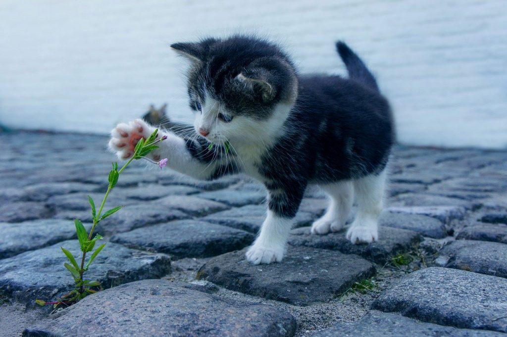 30 anni di Festa nazionale del gatto, una ricorrenza da celebrare con l'alimentazione su misura Pet's Planet