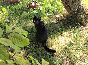 Sensinary®: più nessun problema di calcoli per il gatto Kuroneko