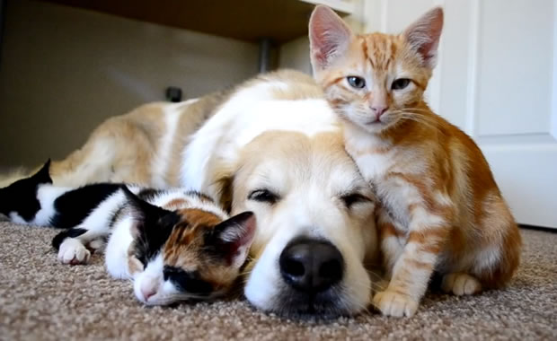 Preferenza Le curiosità di Pet's Planet: la memoria del cane e del gatto YT11