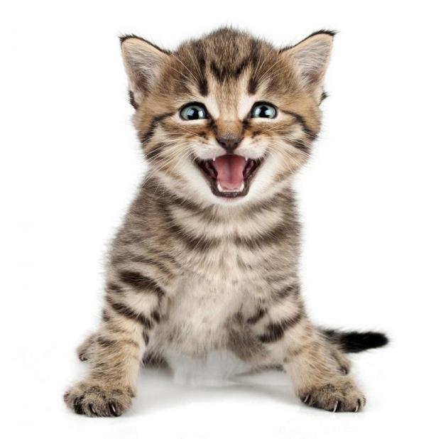 Pet 39 s planet e il inguaggio dei gatti for Il linguaggio dei gatti