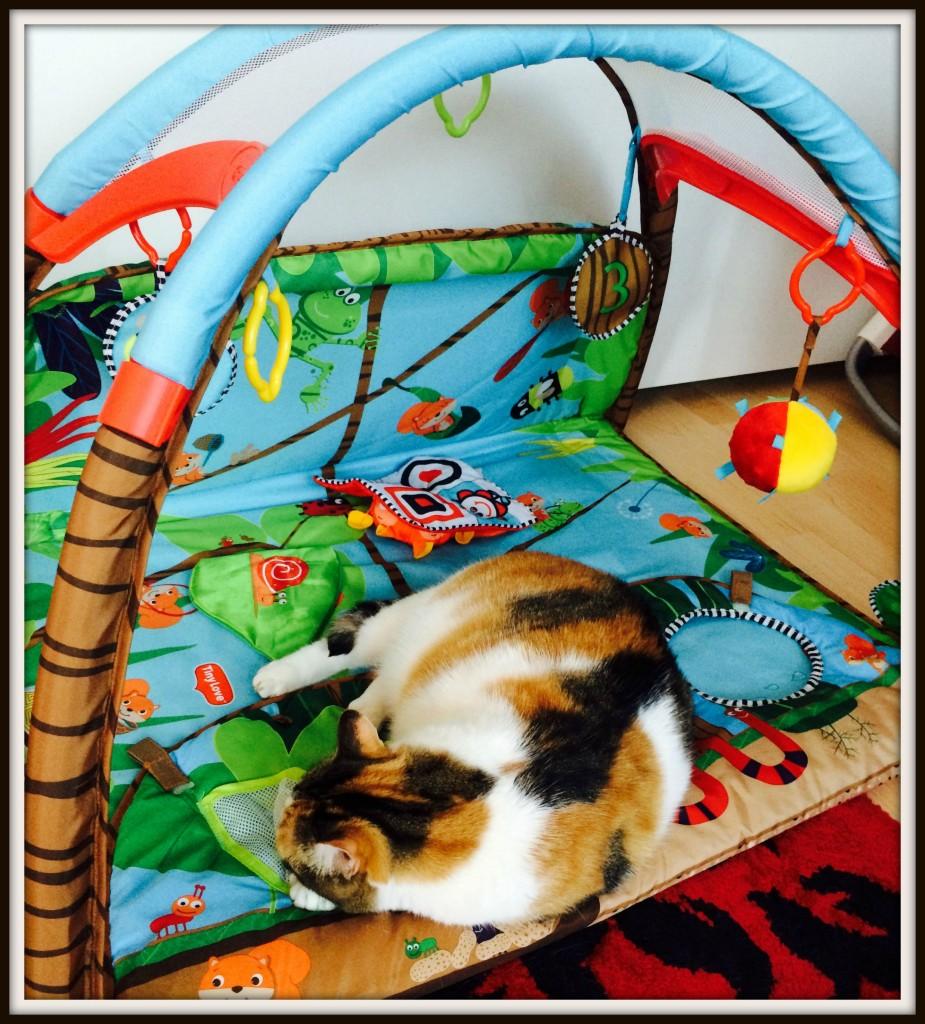 La chatte Pulce de retour en enfance!