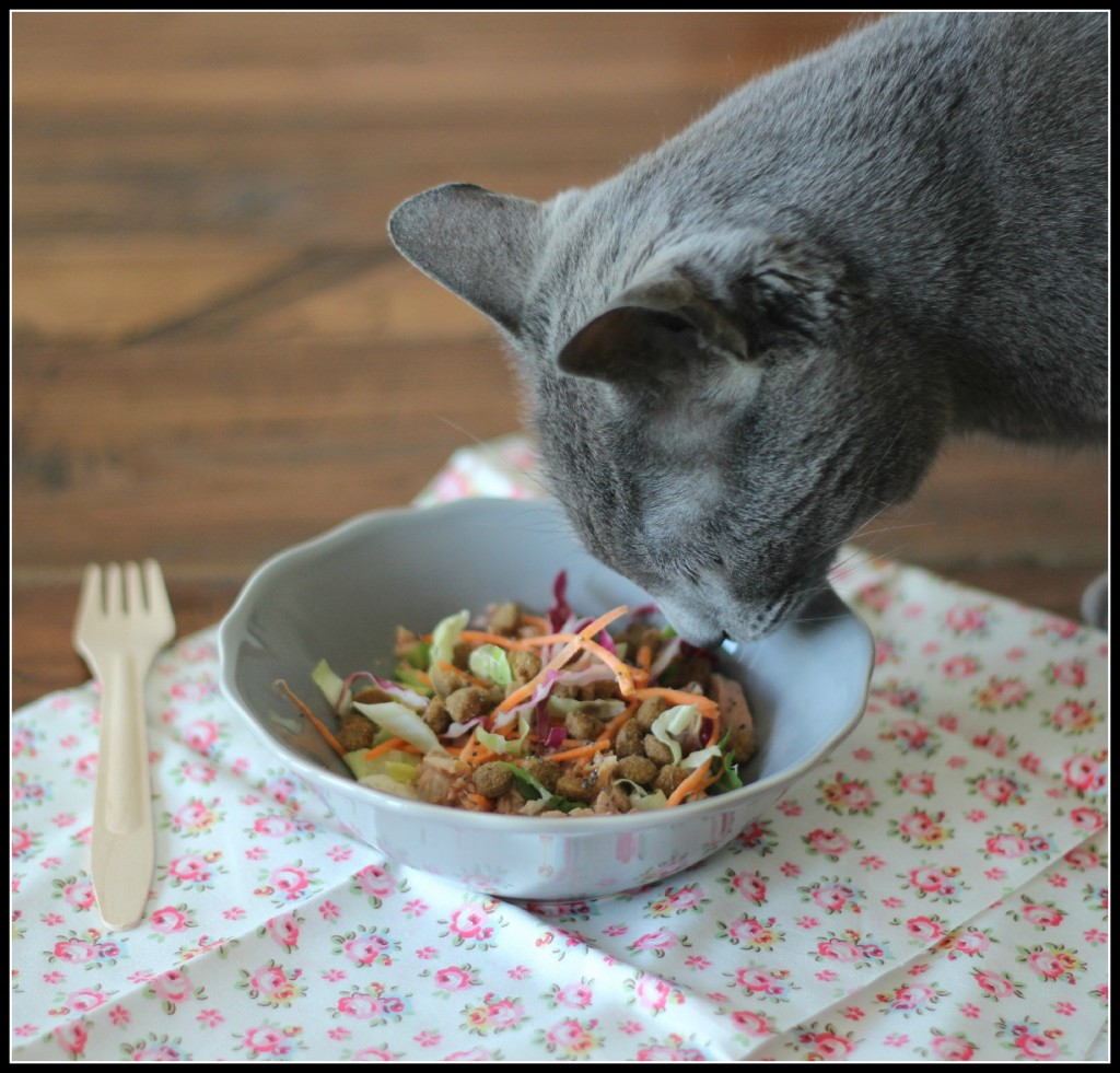 Ricetta a 4 zampe: insalatina croccante con tonno al naturale Pet's Planet