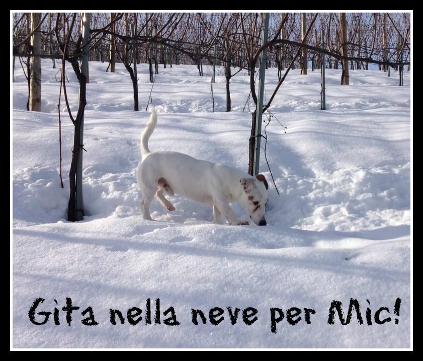 Passeggiata nella neve per il nostro amico Jack Russell Mic!