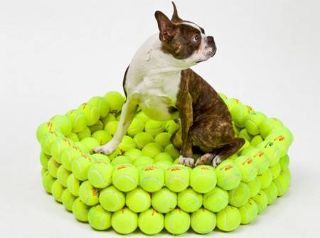 3 Cucce Fai Da Te Per Cani E Gatti Pet S Planet Blog News