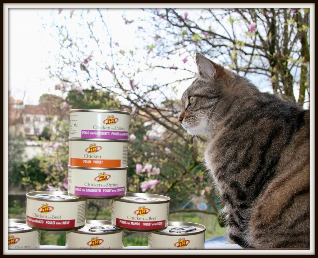 Eden & Apollonia, le gatte dai gusti difficili… che amano Pet's Planet!