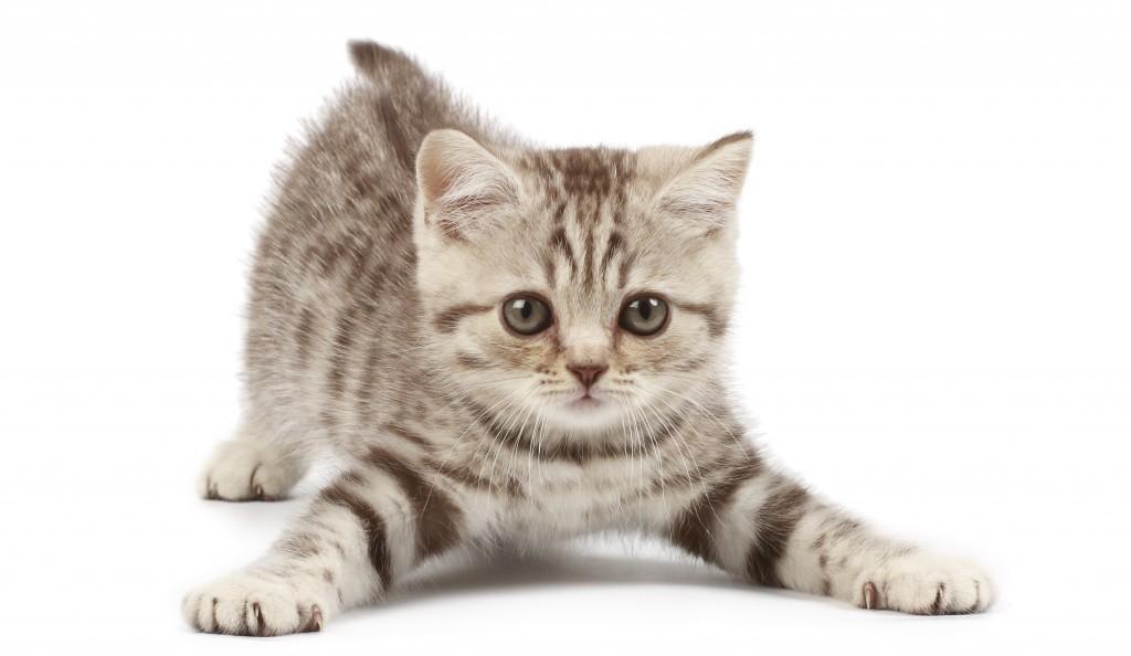 Le langage du chat: quelques curiosités!