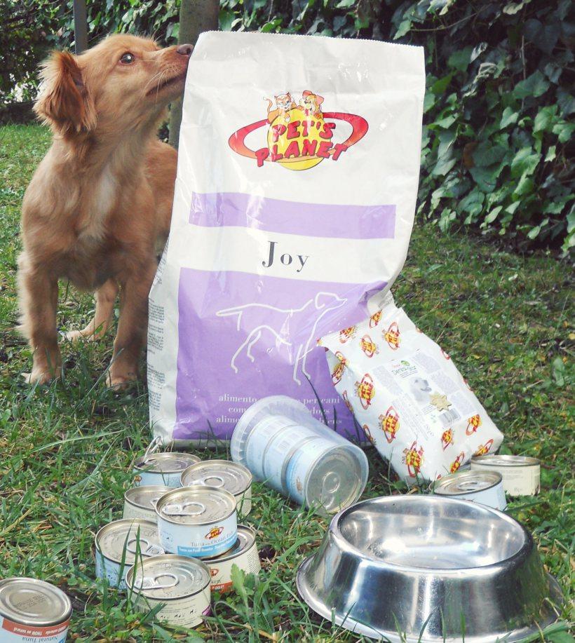 Il Jack Russell Lilli e la sua dieta Joy Pet's Planet