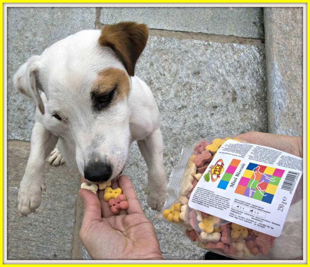 Visita dal veterinario e poi… un delizioso (e goloso!) premio!