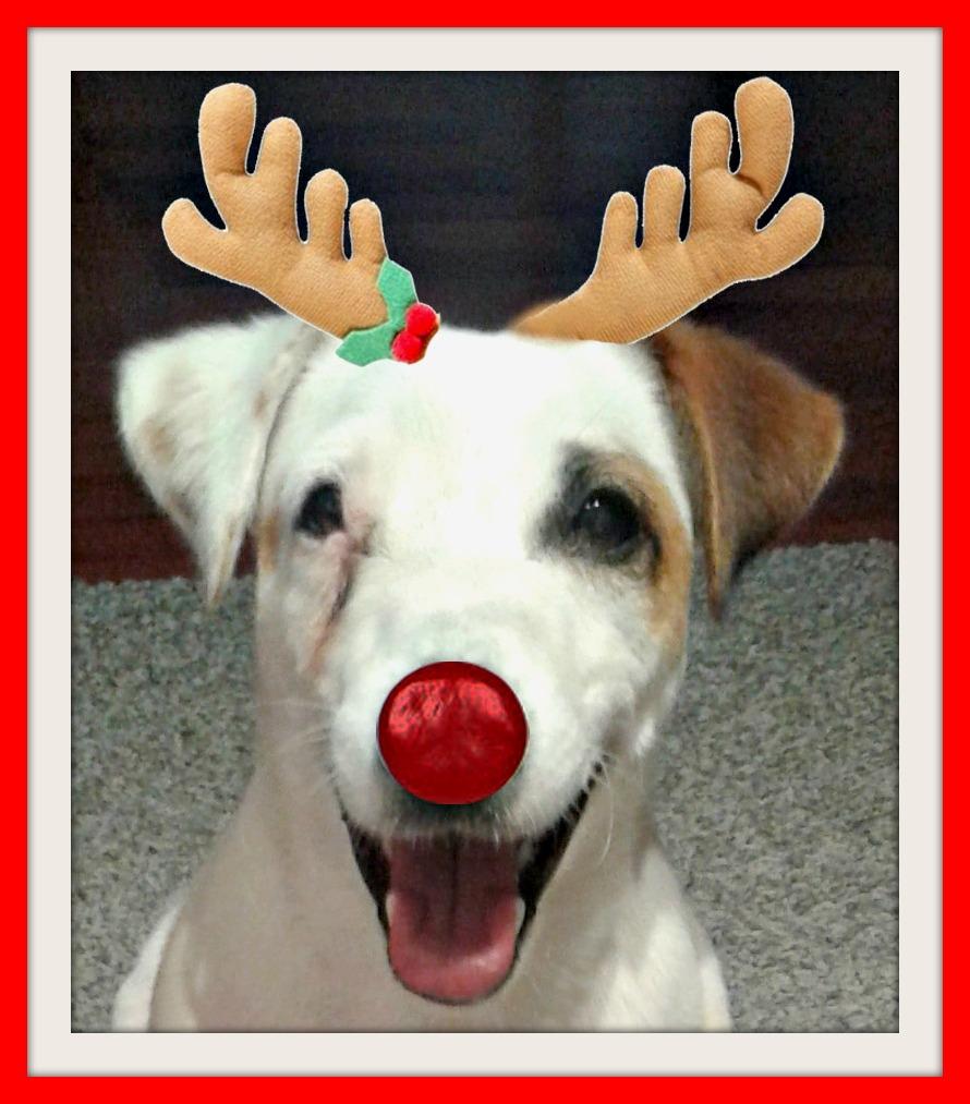 Le vacanze di Natale del Jack Russell Mic