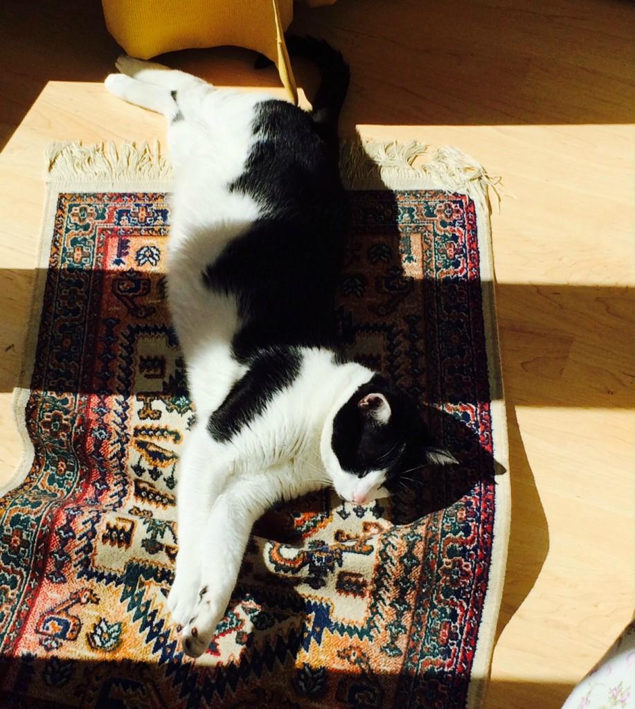 Pagnotta, il gatto dormiglione, si desta dal lungo sonno invernale… forse!