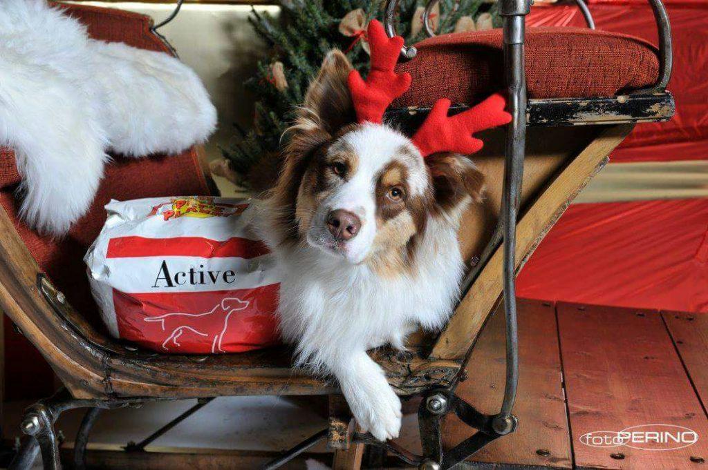 Idee per regali a quattro zampe: utili, divertenti, oppure il cesto Pet's Planet