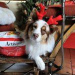 idee regalo di Natale per cani