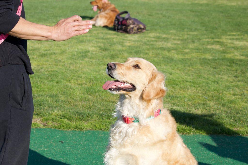 Entraînez un chien à obéir aux ordres en quelques étapes simples