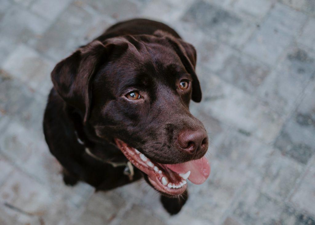 Consigli per una corretta igiene orale di cani e gatti