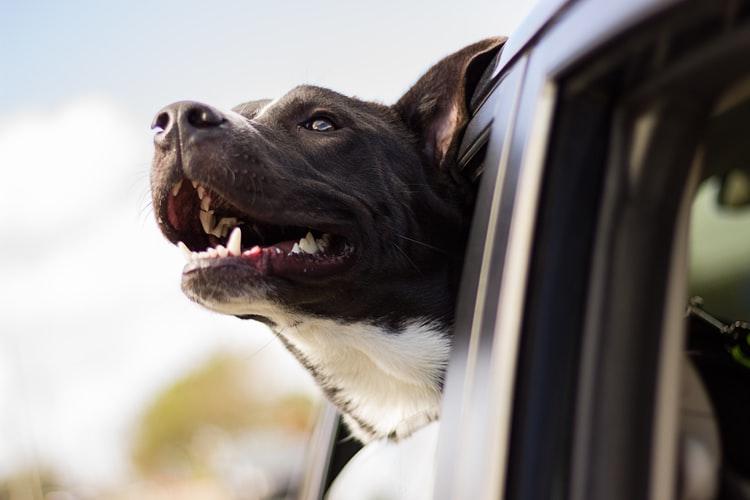 Dal viaggio alla pappa, i consigli di Pet's Planet per le tue vacanze con cani e gatti