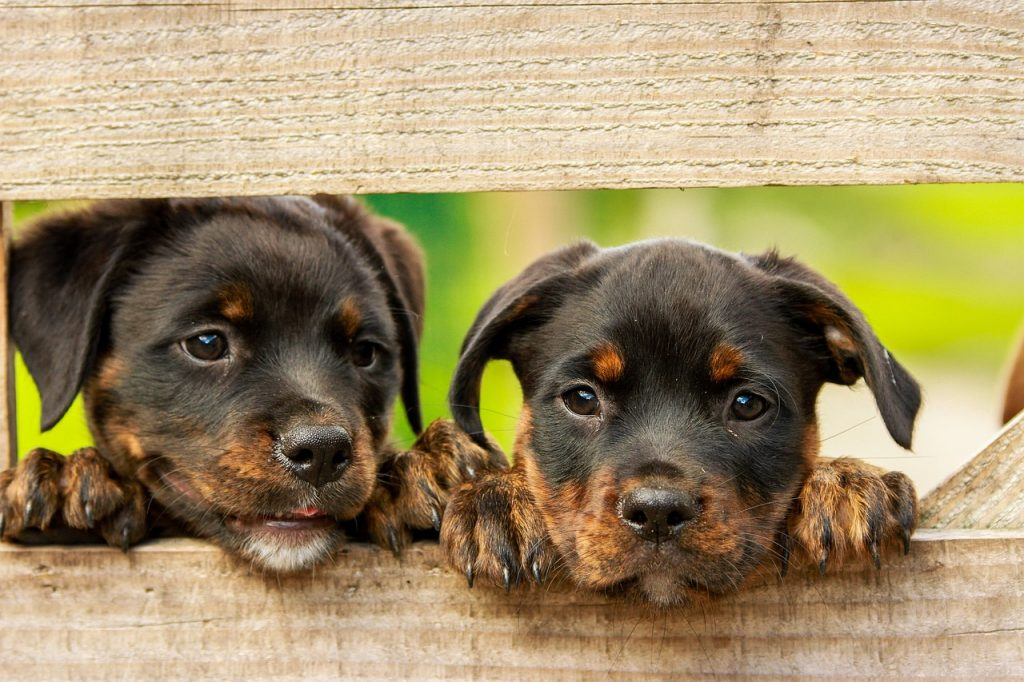 Accogliere un cucciolo di cane in casa, consigli pratici per non farsi trovare impreparati