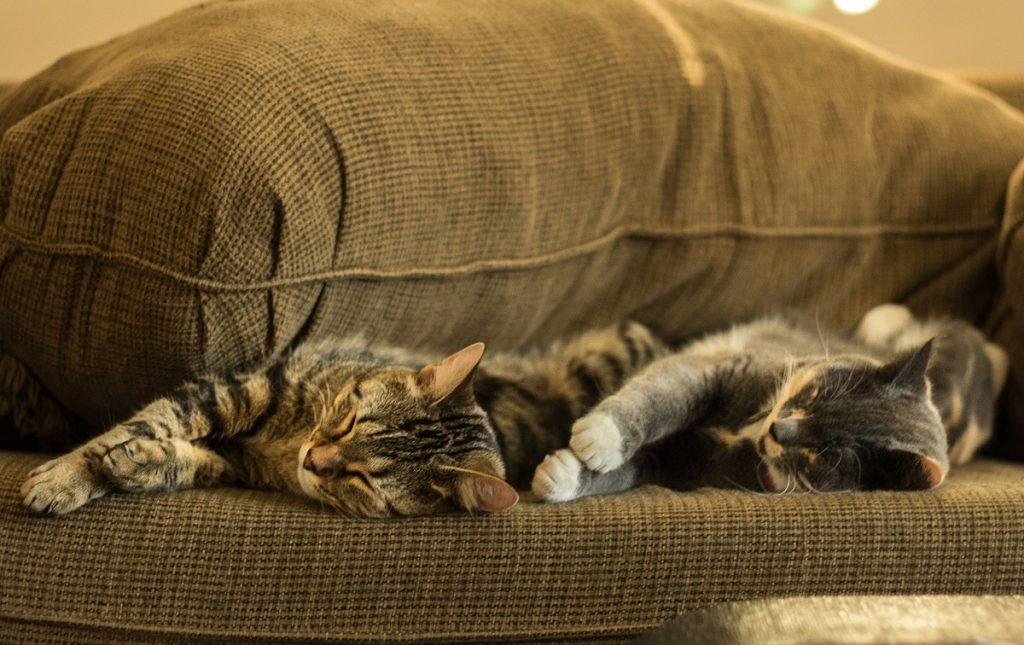 L'importanza del sonno nei cani e nei gatti